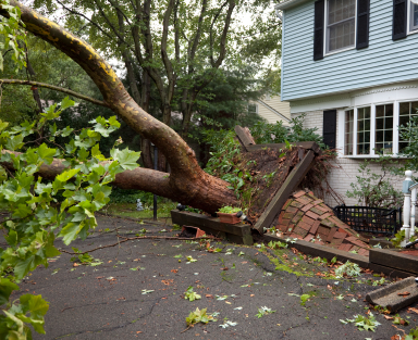How Much Does it Cost to Remove a Fallen Tree Tree Removal