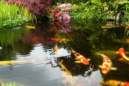 Types of plants for japanese garden landscapers for Typical japanese garden plants