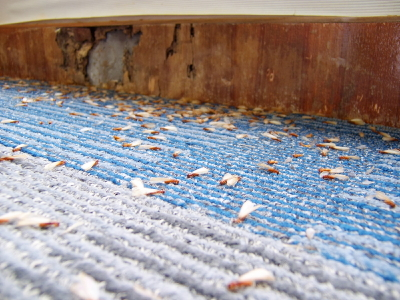 Signs that you have termites - Pest Control - Seva Call Blog