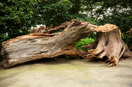 How to Repair a Split Tree Trunk Tree Removal
