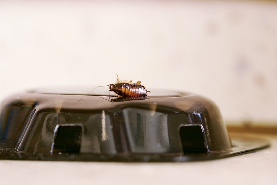 Safe Ways to Kill Cockroaches Pest Control