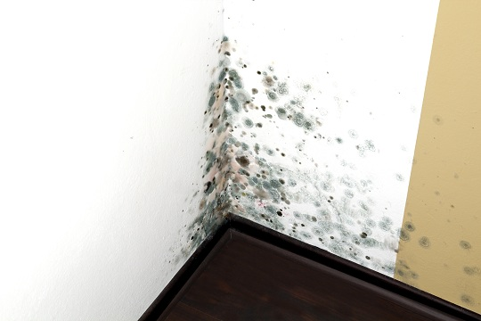 Household Mold Types - Maid Services