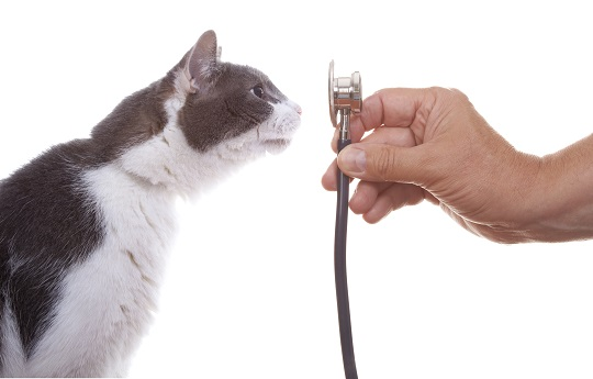 My Cat Keeps Throwing Up - Veterinarians