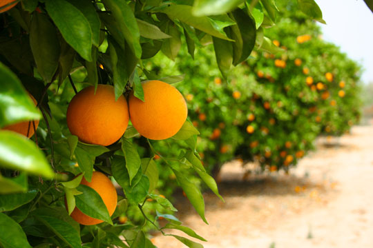 Fruit Trees For Small Gardens - Landscapers - Talk Local Blog