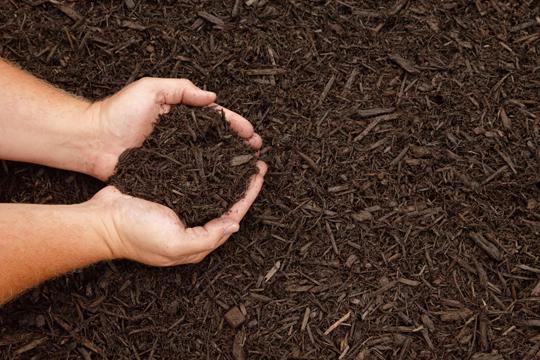 Model Nitrogen Soil Nitrogen Rich Soil to Get