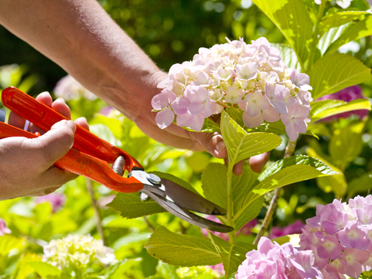 How to Prolong Life of Cut Flowers